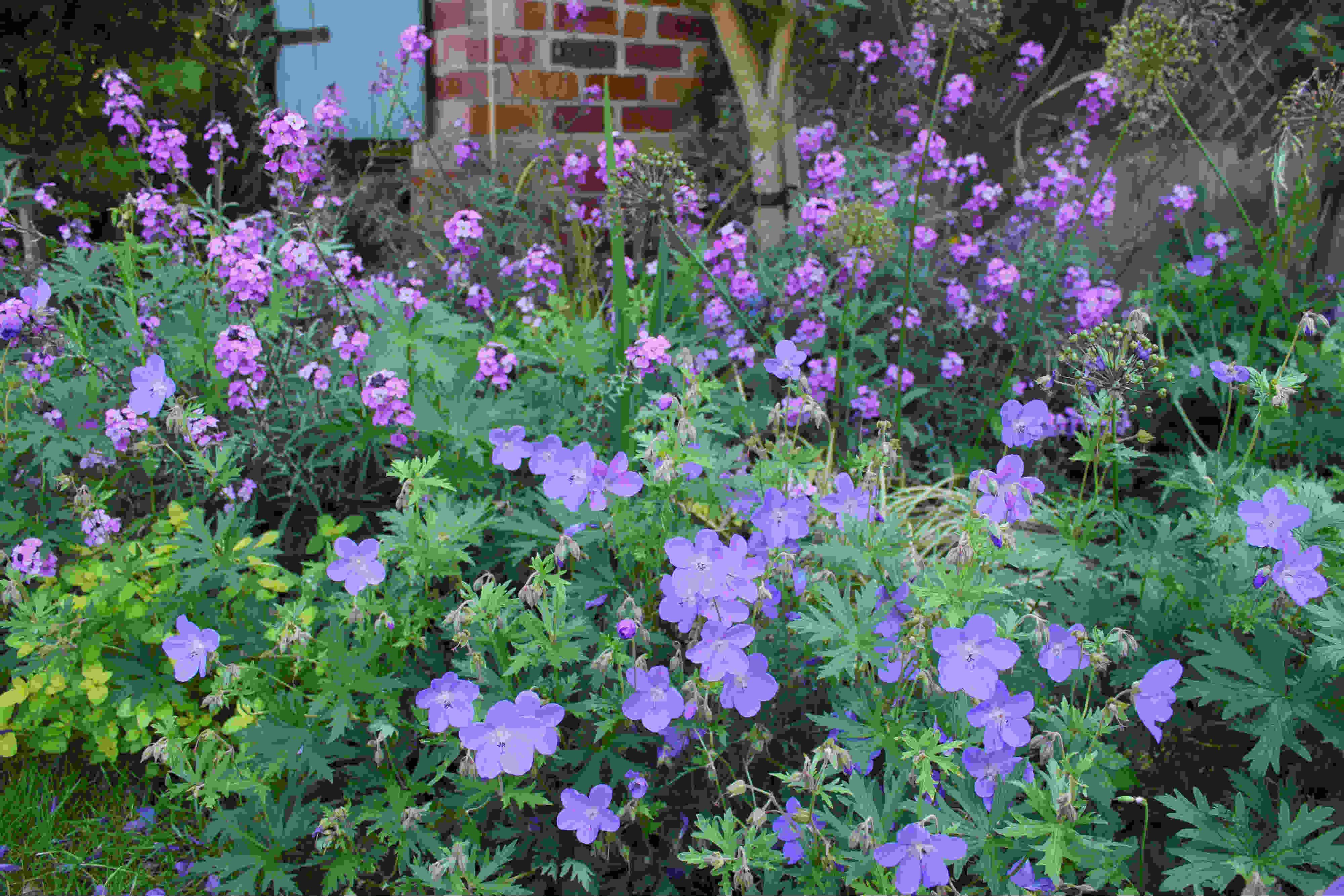 Late Spring garden 2018 small