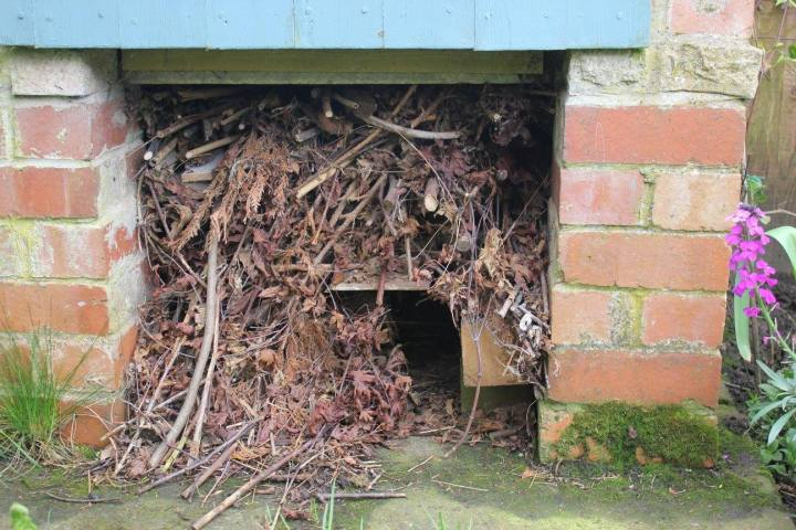 Hedgehog house under wood store