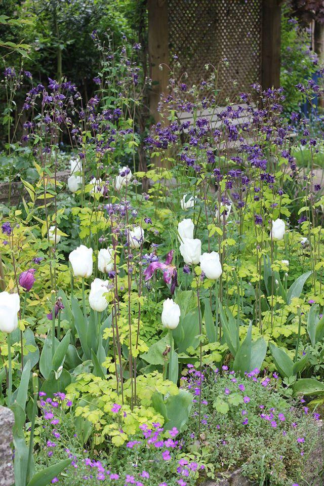 Spring wildlife garden