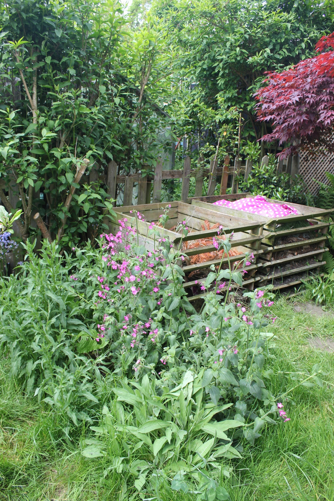 Wild corner of garden for wildlife