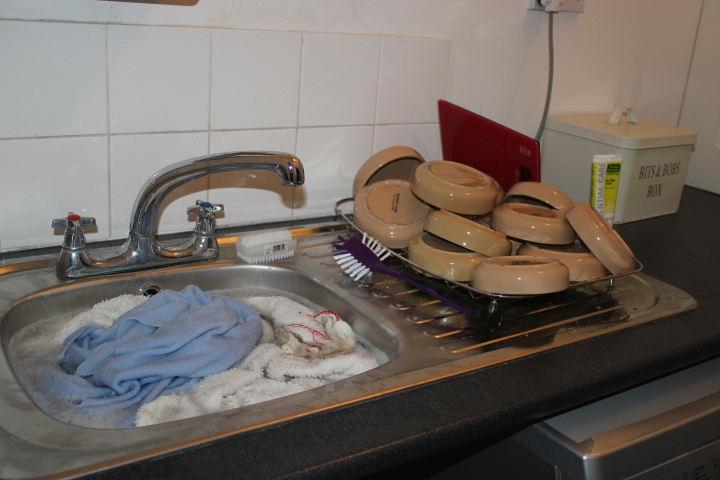 Washing up in my hedgehog rescue
