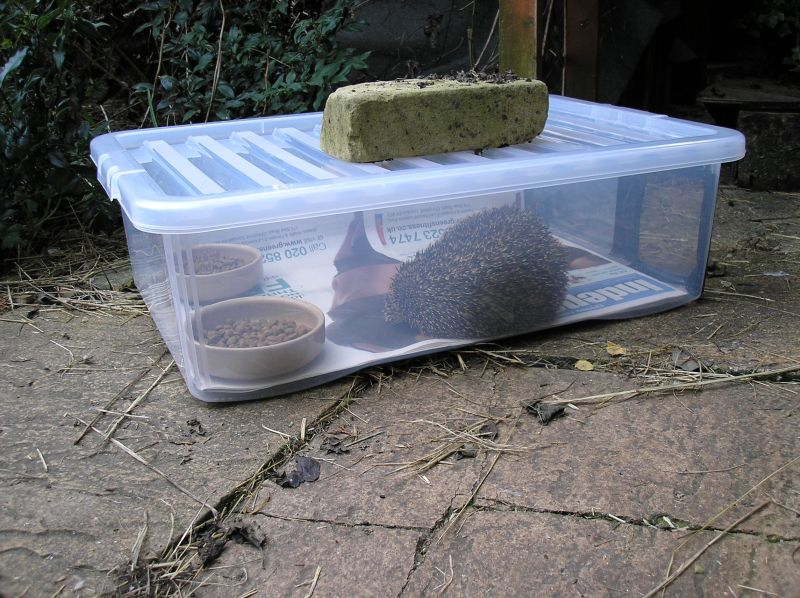 DIY hedgehog feeding station