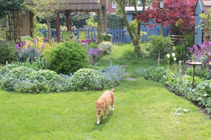 Knapton lane garden.JPG