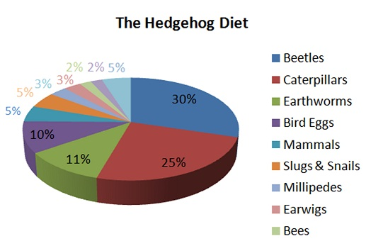 wild hedgehog diet