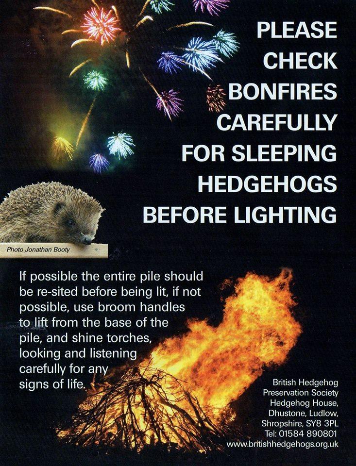 Hedgehog bonfire poster