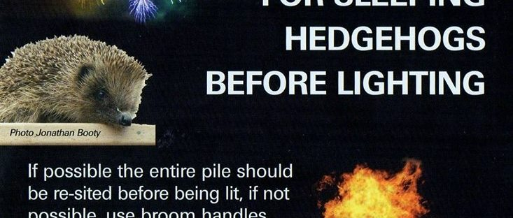 Hedgehog bonfire poster