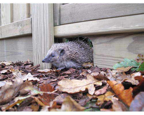 Hedgehog friendly fencing