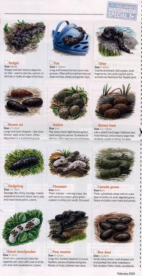 Garden poo chart