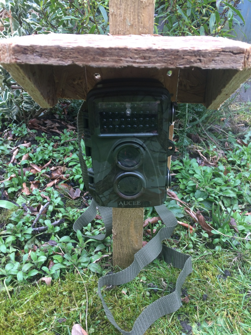 How to choose a wildlife trail camera, night camera