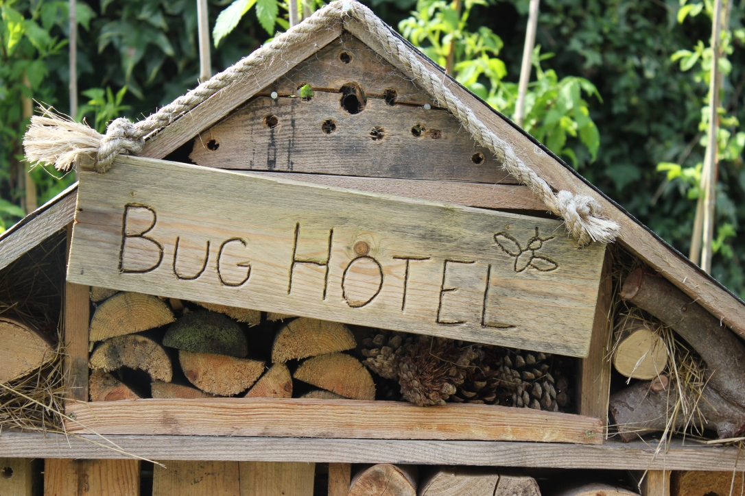 Insect hotel bug hotel