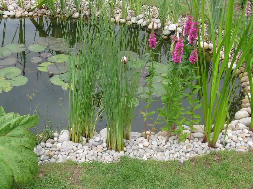 Hedgehog friendly pond