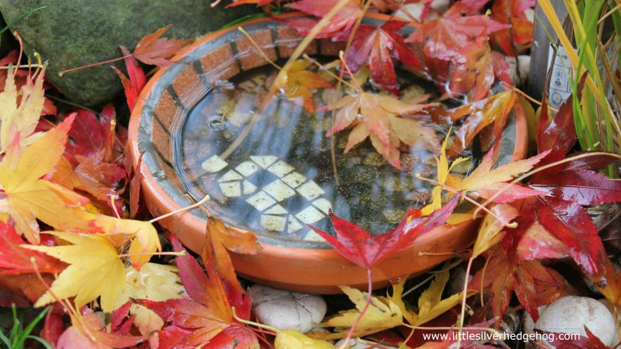 Hedgehog water bowl