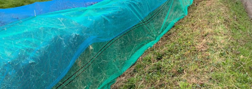 Netted hedgerow, hedgerow netting