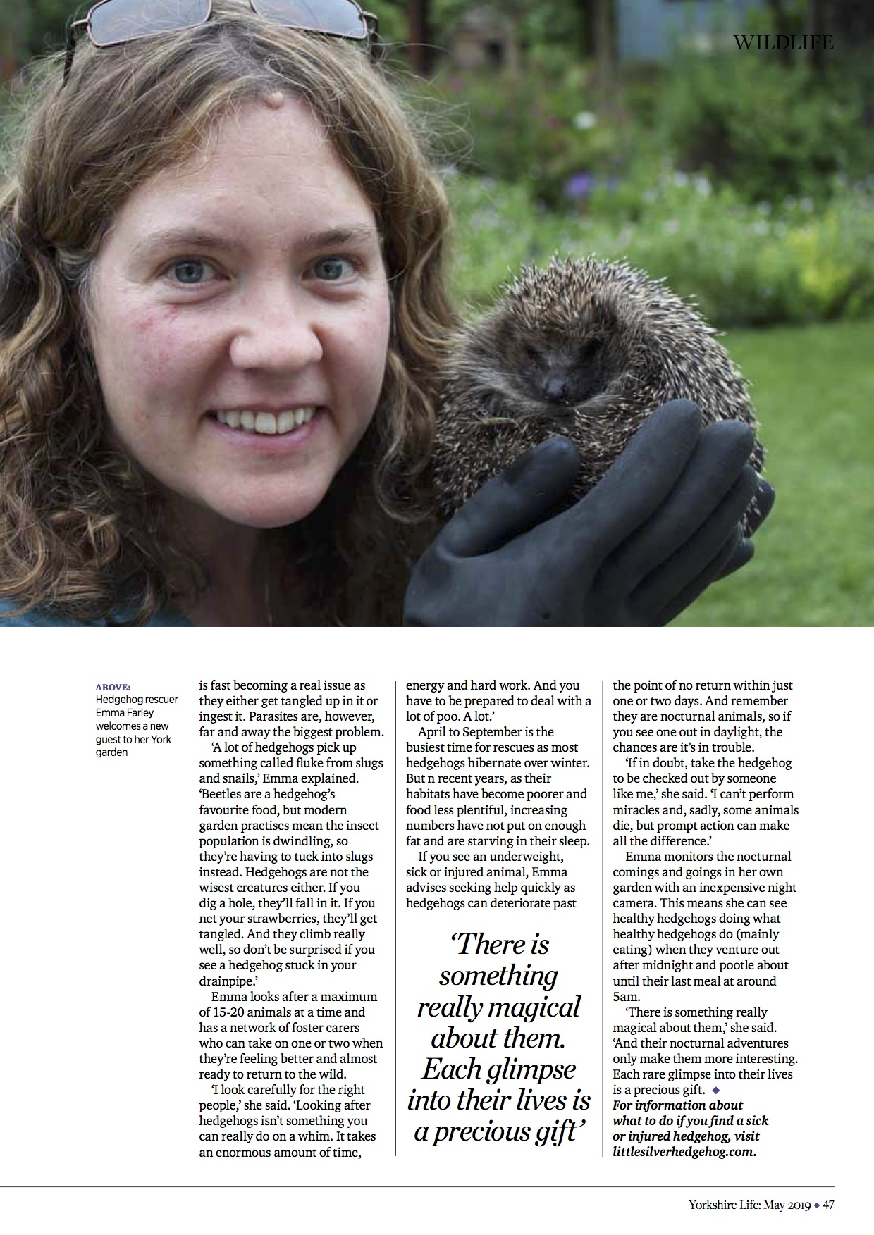 Yorkshire Life magazine hedgehogs and gardening