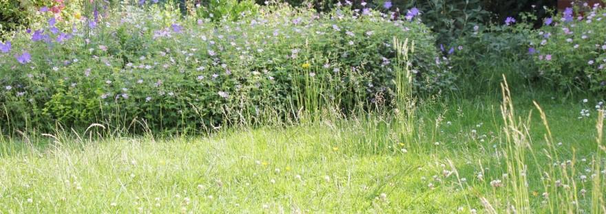 Wild lawn