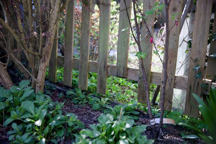 Hedgehog fence gap hedgehog highway